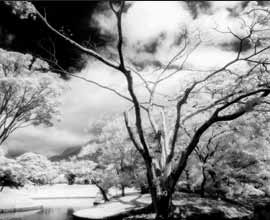 Cokin Series P 007 Infrared